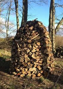 firewood stacked for drying