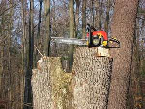 tools needed for cutting your own firewood