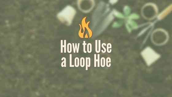 How to Use a Loop Hoe
