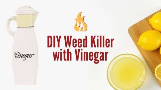 DIY Weed Killer With Vinegar